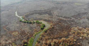 Pantanal perda biodiversidade