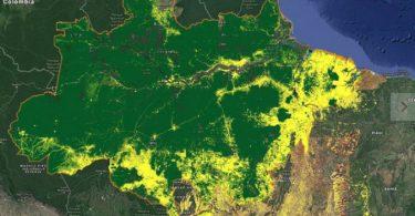 corte novo satélite monitoramento desmatamento