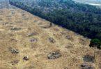 desmatamento florestas protegidas