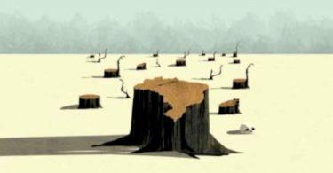 destruição amazônia