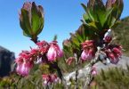 espécies de planta extinção