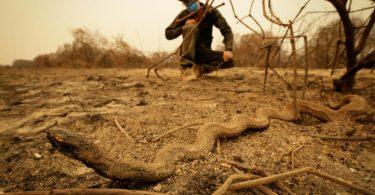queimadas pantanal 210