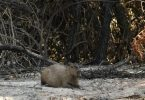 queimadas pantanal setembro recorde