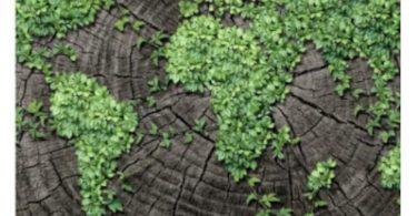 Banco Central sustentabilidade