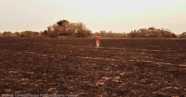 Pantanal prevenção