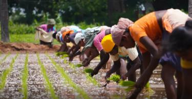 crise climática insegurança alimentar