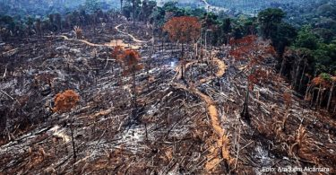 desmatamento Floresta Amazônica 2020