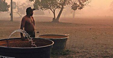 Pantanal caos humanitário