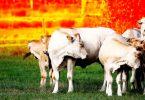 alimentação emissões
