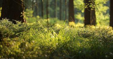 conservação florestal