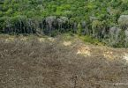 desmatamento Amazônia aumenta