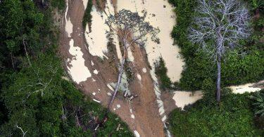 desmatamento Amazônia novembro