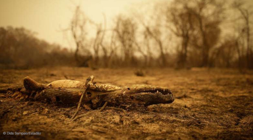 queimadas Pantanal ação humana
