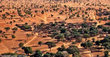 árvores no Sahel