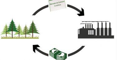 mercados de carbono