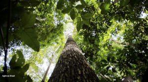 mercados de carbono Brasil