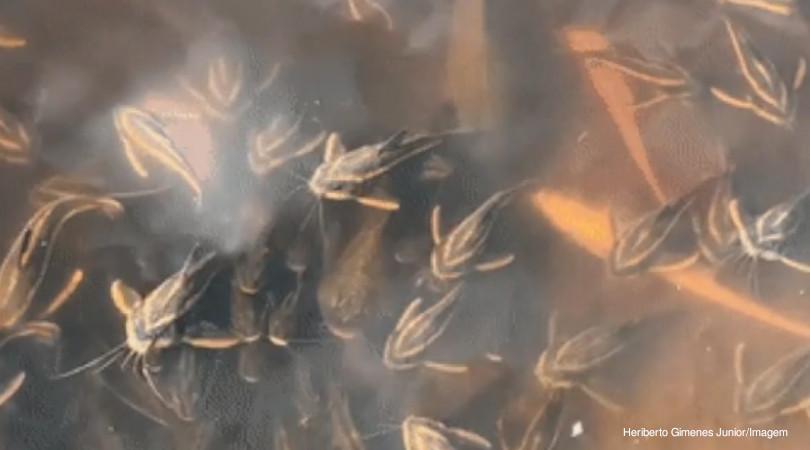peixes ameaçados