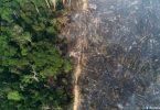 proteção Amazônia