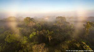 Amazônia aquecimento global