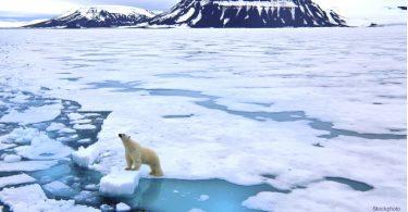 Fevereiro Ártico