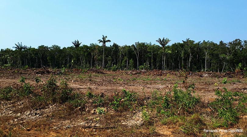 IBGE perda vegetação florestal
