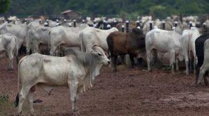 carne exportação China