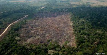 desmatamento Amazônia