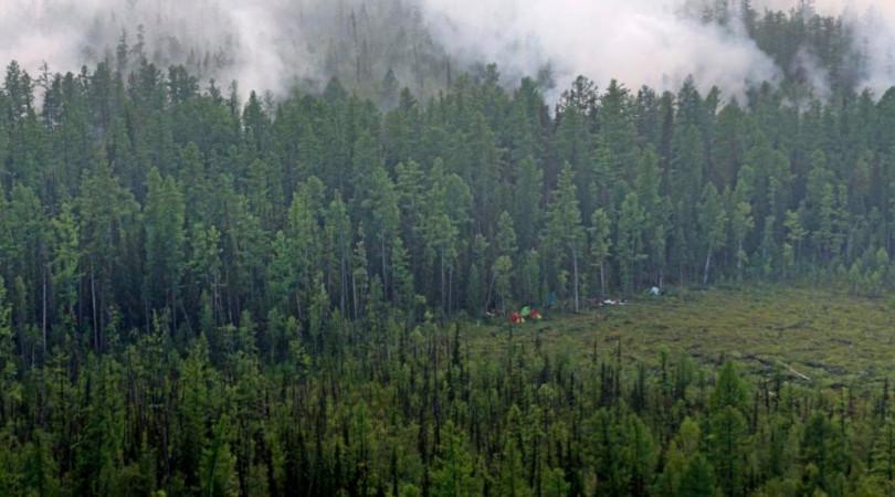 florestas russas