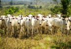 novo guia pecuária sustentável