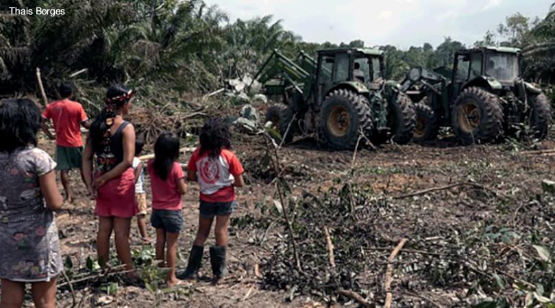 oléo de palma Amazônia