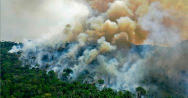 perda florestas tropicais