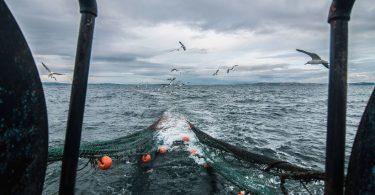 pesca de arrasto