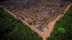 vetos ambientais