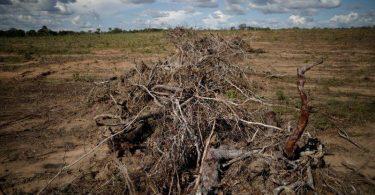 Amazônia desmatamento