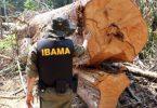 Amazônia perigosa