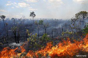Cerrado Amazônia