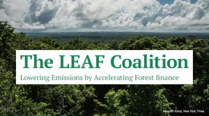 The Leaf Coalition