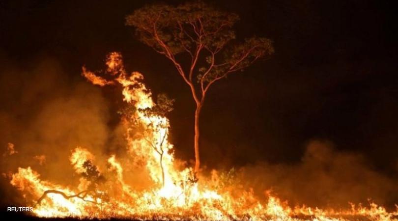 combate ao desmatamento