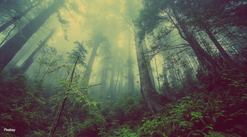 créditos de carbono florestal