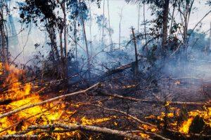 degradação florestal Amazônia