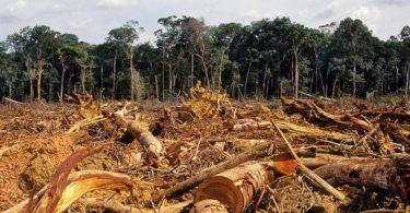 eua política ambiental brasil