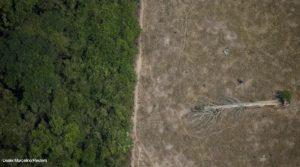 Amazônia emissões