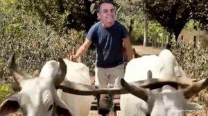 Bolsonaro passando boiada
