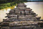 EUA apreensão madeira exportada