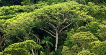 Mata Atlântica desmatamento