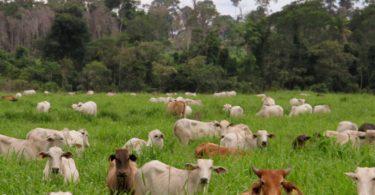 agricultura de baixo carbono