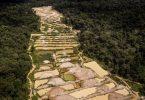garimpo ilegal Amazônia