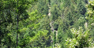 regeneração florestal