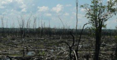 savana Amazônia
