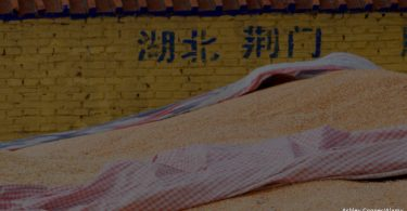 China produção de soja